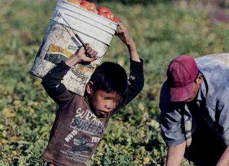 Michoacán, decimo lugar nacional en trabajo infantil. Noticias en tiempo real